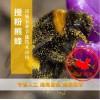 熊蜂多少钱丨熊蜂授粉丨熊蜂授粉技术丨北京嘉禾源硕
