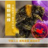 番茄授粉丨熊蜂授粉丨熊蜂丨北京嘉禾源硕