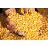 枣阳傲生养殖常年求购玉米碎米油糠高粱等饲料原料