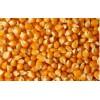大量收购玉米、小麦等饲料原料