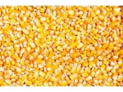 饲料厂大批量采购玉米、小麦、大米、大豆、高粱等饲料原料