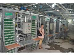河南中州畜牧鼎鼎彩票生产鸡笼集蛋器