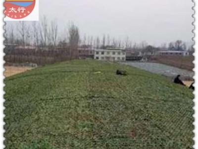 上海优质的工地盖土网遮阳网 防尘网制造商