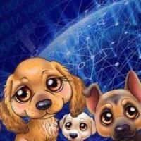 互联网区块狗开发