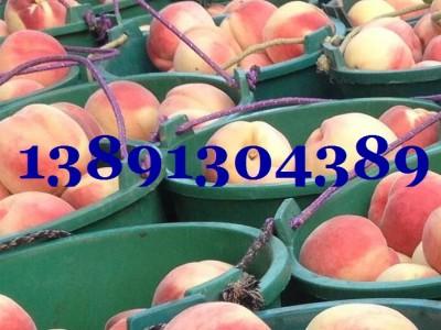 陜西阿布白毛桃基地,北京八號毛桃,中華桃王產地價格