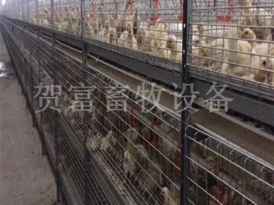 肉鸡笼养中文第一社区 养鸡场肉鸡笼养中文第一社区野狼社区必出精品 德州肉鸡笼批发