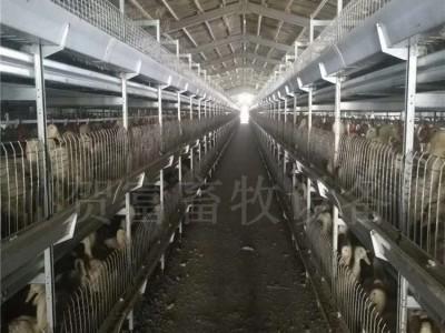 养鸭中文第一社区 德州肉鸭笼养中文第一社区野狼社区必出精品批发 层叠式立体肉鸭笼
