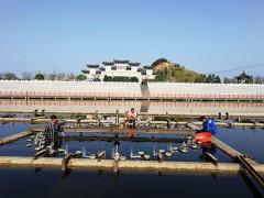 桂阳文化园喷泉改造完工