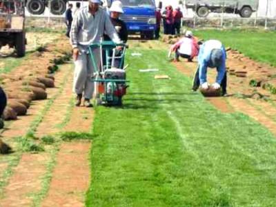 贵池手推汽油草坪起草机 自动汽油起草皮机 马尼拉草坪铲草机