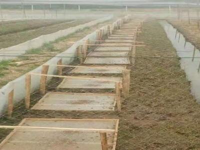 纯新料耐酸碱抗拉加厚30目青蛙养殖所用丝网这样耐晒防风结实