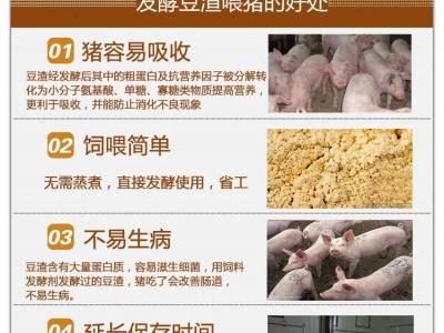 发酵豆渣喂猪用这种发酵剂可以预防猪腹泻拉稀