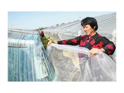 批发大宽幅可拼接防虫网蔬菜果木防虫保护果木防晒防落果冰雹
