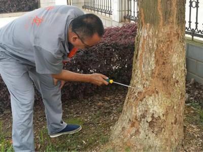 园林白蚁防治服务_宏大白蚁防治靠谱的白蚁防治推荐
