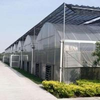 钢架大棚工程|鑫博温室专业承建钢架大棚