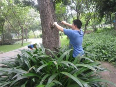 泉州白蚁防治专家 可信赖的白蚁防治优选宏大白蚁防治