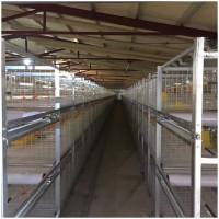 肉鸡养殖设备笼养设备层叠式鸡笼山东金石农牧机械