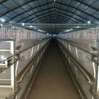 肉鸡养殖设备笼养设备鸡舍笼具山东金石农牧机械